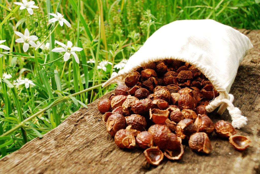 Мыльные орехи – как использовать для стирки и мытья волос и лица